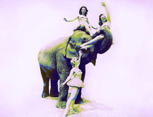 Branding: un elefante nella stanza
